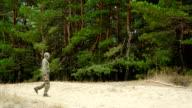 man walk in pine forest video