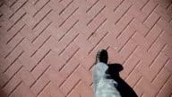 Man Walking on pavement video