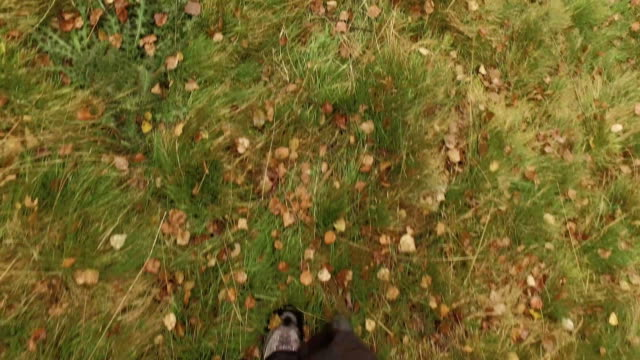 man walking outdoor in woods forest with bad weather overcast day. 4k POV overhead on footsteps shot video
