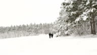 Man with an older woman walking down the a snowy road through a winter forest video