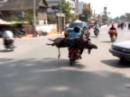 Man with Pig on Motorcycle / Motorbike video