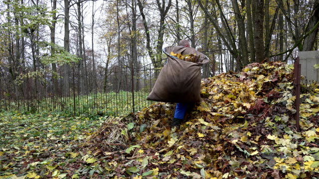 man worker throw leaves out of bag into large heap compost. FullHD video