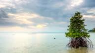 mangrove at beach timelapse video