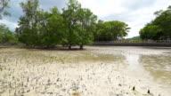 Mangrove beach video