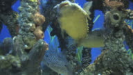 Mangrove community 1 video