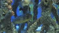 Mangrove community 3 video