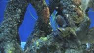 Mangrove community 4 video