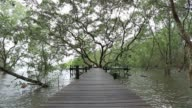 Mangrove forest and wood bridge video