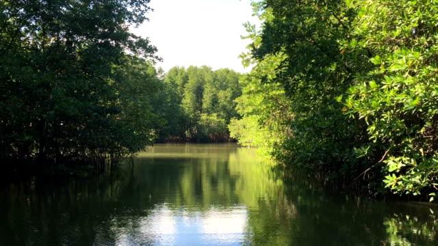 HD VDO : Mangrove forest video
