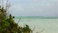Mangrove & ocean video