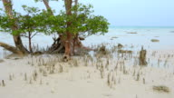 Mangrove prop root video