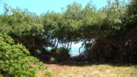Mangrove & sea video