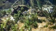 Mangrove sea video