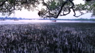 mangrove swamp near Sarasin bridge video