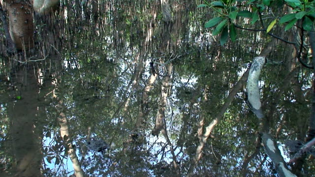 Mangrove swamp with bubbles video