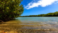 Mangrove timelapse video