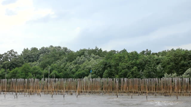 Mangrove tree against the wind and bamboo wood wall video
