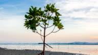 Mangrove tree on twilight time video