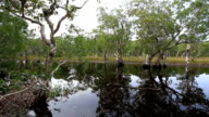 Mangrove trees in a peat swamp forest video