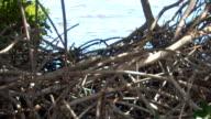 Mangrove & tropical sailboat video