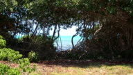 Mangrove & tropical sailboat - zoom in video