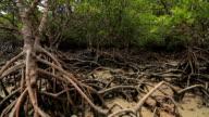 Mangrove video