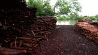 mangrove wood to be processed as charcoal video