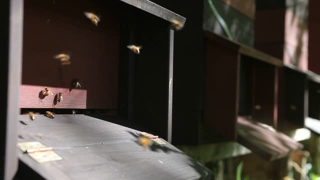 Many beehives in apiary with hive entrance on the front video