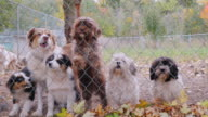 Many different breeds of dogs behind the fence or kennel animal shelter video