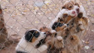 Many dogs in the kennel grab pieces of food through the mesh. Feeding of animals hands video