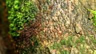 Many termites video