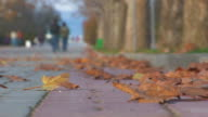 Maple leafs on road and people walking in autumn park. video