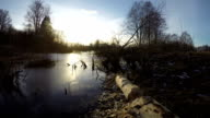 March pond in early spring with beaver gnaw broken aspen tree, time lapse video
