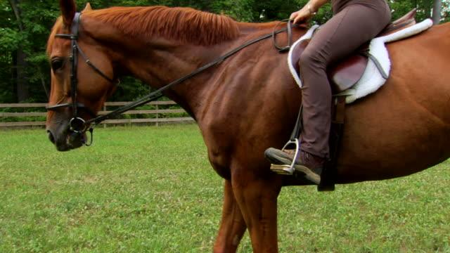 Marcia's Horse - Tilt Up video