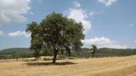 Maremma Countryside and Mediterranean Vegetation in Tuscany video