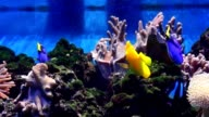 Marine Aquarium, fish video