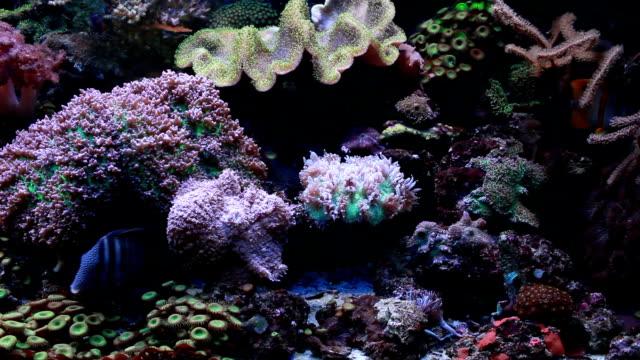 Marine aquarium video