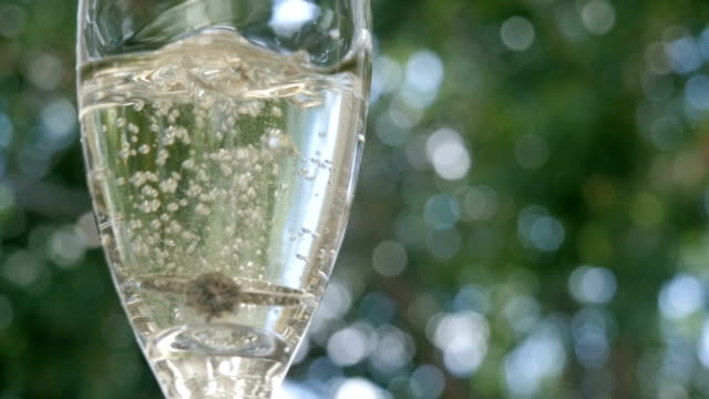 Marriage Proposal with a Glass of Champagne video