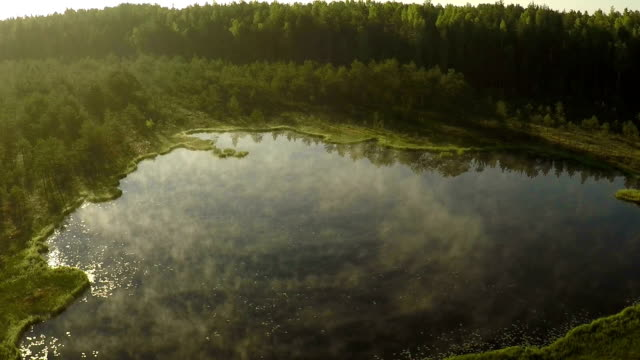 Marsh and lake video