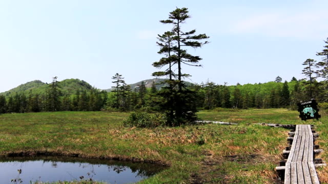 Marshland of Ukishima in Hokkaido video