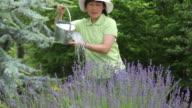 Mature Asian woman watering garden video