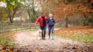 Mature Couple On Autumn Walk With Golden Retriever video