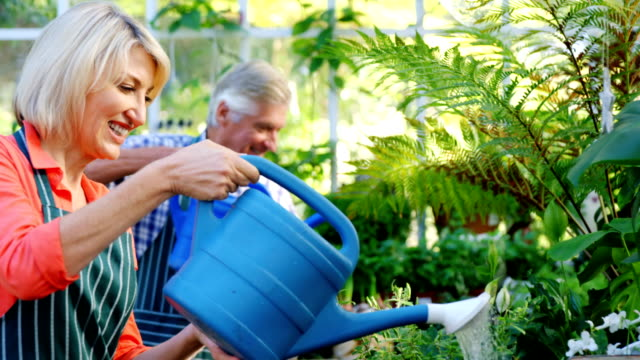 Mature couple watering plants video