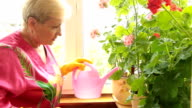 Mature woman caring for flowers in pots video