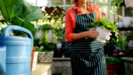 Mature woman carrying pot plant in greenhouse video