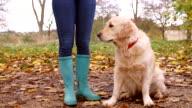 Mature Woman On Autumn Walk With Golden Retriever video