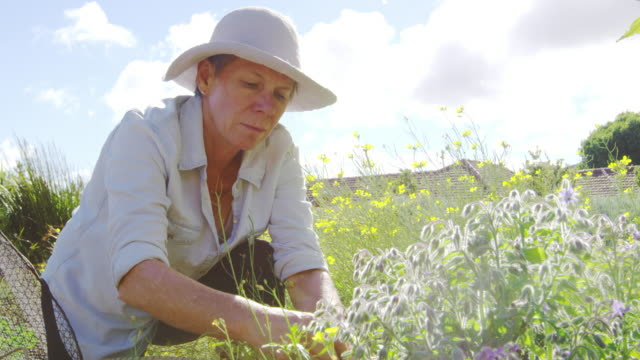 Mature Woman Working On Community Allotment video
