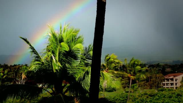 Maui Palms with Vivid Rainbow video