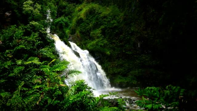 Maui Waterfall Wide Angle along Road to Hana video