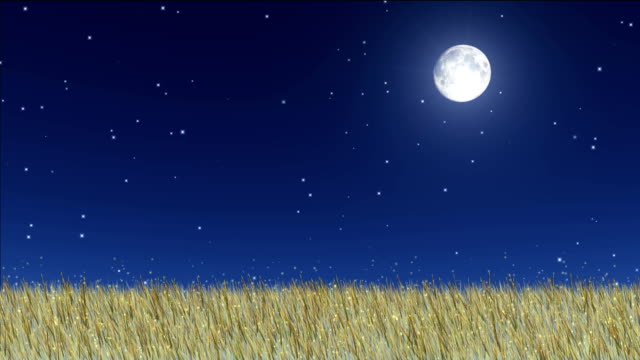 meadow at night video